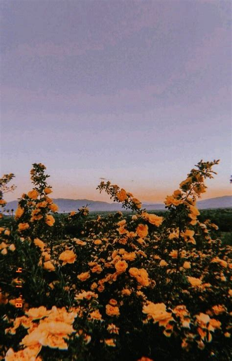 Pin by Olyvia Garcia on grunge/tumblr | Aesthetic