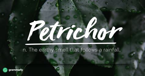 7 Words for Nature Lovers   Grammarly Blog