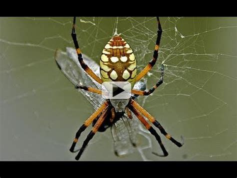 Venomous Spiders on Space Station - YouTube