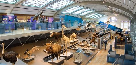 Permanent Exhibition » Gallery of Evolution   Royal